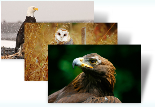 Birds of Prey Windows 7 Theme